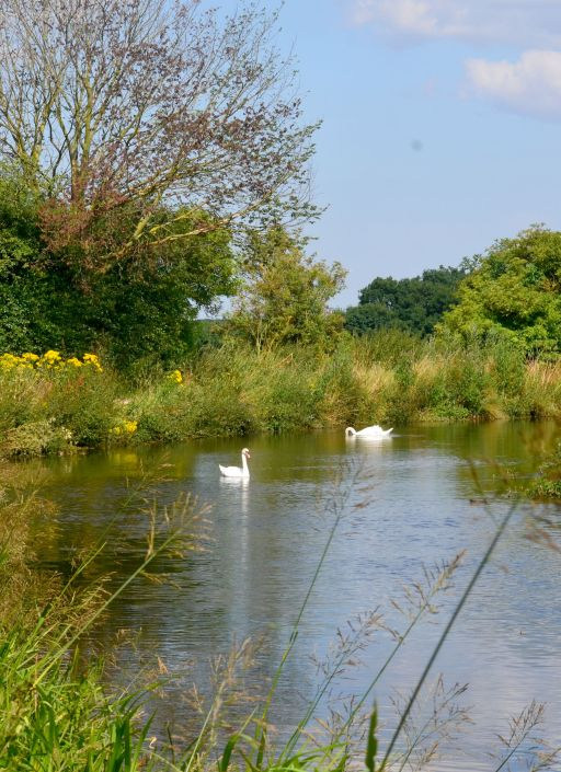 Swans above Turnerwood