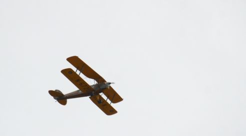 Passing tiger moth