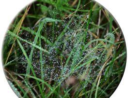 Web & dew