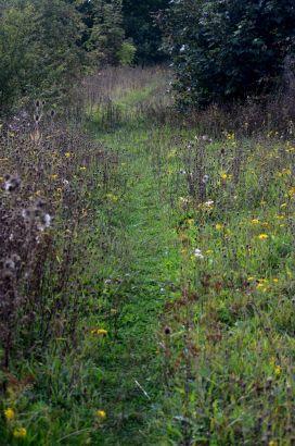 Tr4ack throough grass