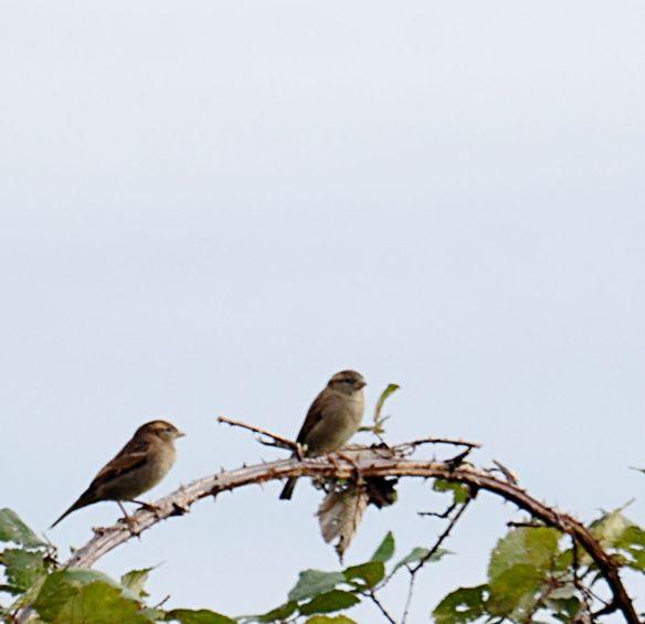 I like sparrows!