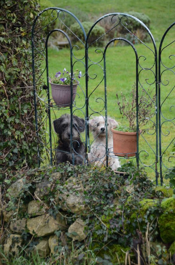 Couple of dogs at Brancliffe