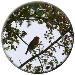 Omnipresent Robin