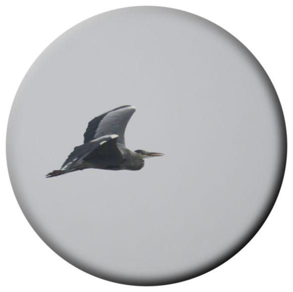 Heron (Doin' The Buggerin' Off)