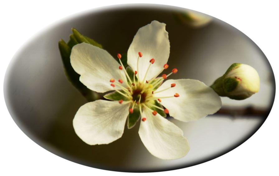 15 03 20 307Plum blossom
