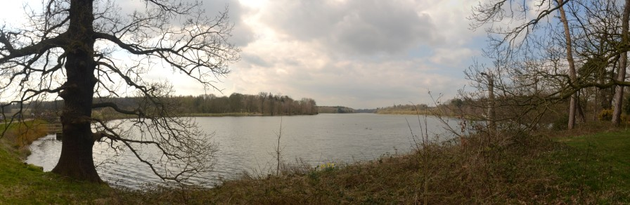 Clumber Great Lake