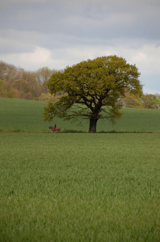 15 05 01 619Horse tree