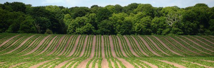 15 0603 211Pattern crop