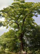 Tree - vertical panorama