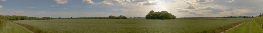 Field at Shireoaks