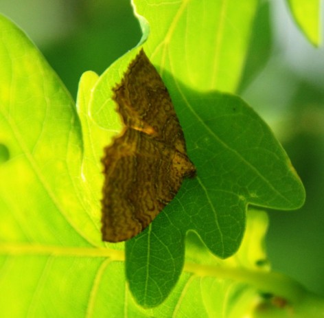 Moth (what moth?)