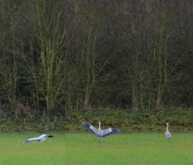 Composite heron