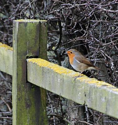 160321_16_08_32_NIKON D80_423On the fence