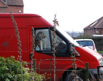 Dog in transit