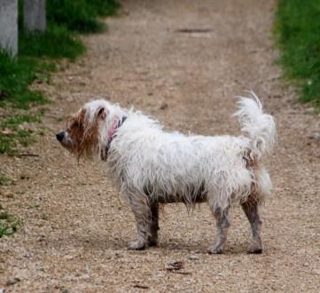 Mucky pup