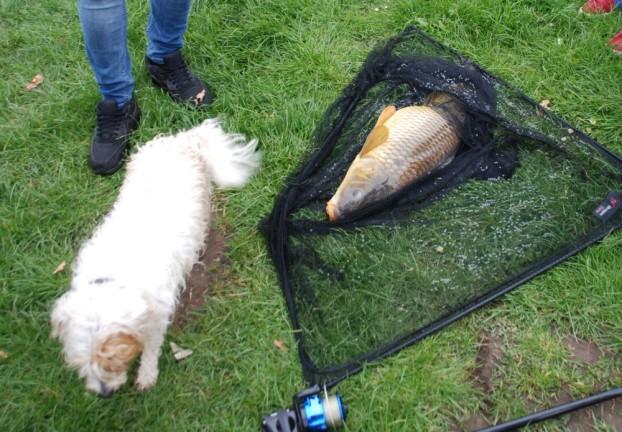 Dog : fish