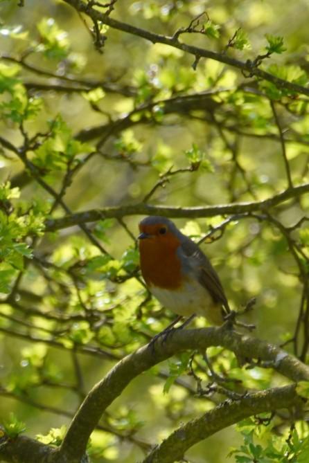 Robins everywhere