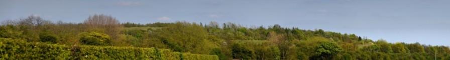 Shireoaks Woodlands