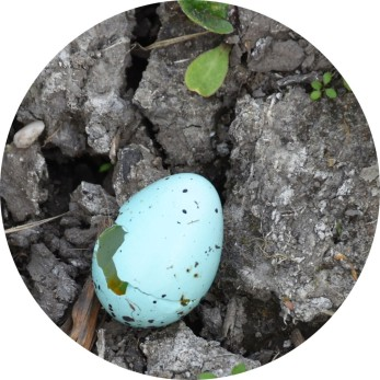 What colour - robin's egg blue?