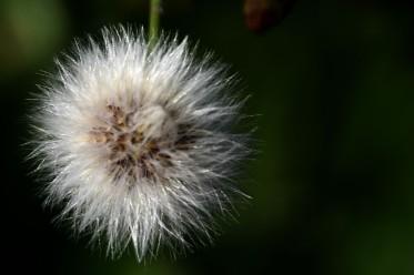Seed sphere
