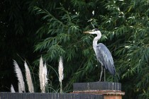 Heron on a plinth