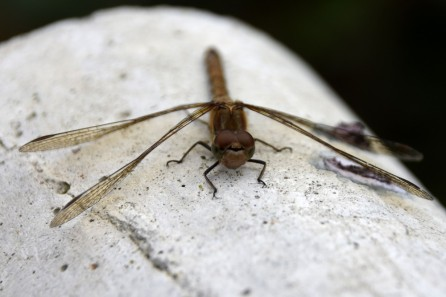 Dragonfly on a concrete fence post