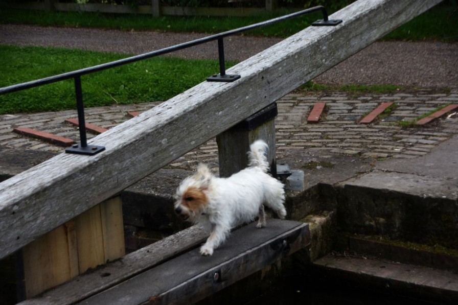 Molly crossing Morse Lock