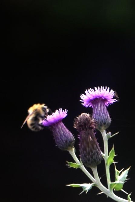 Still pollinating