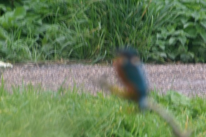 Blurred kingfisher