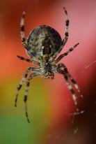 Spiders are MAGIC